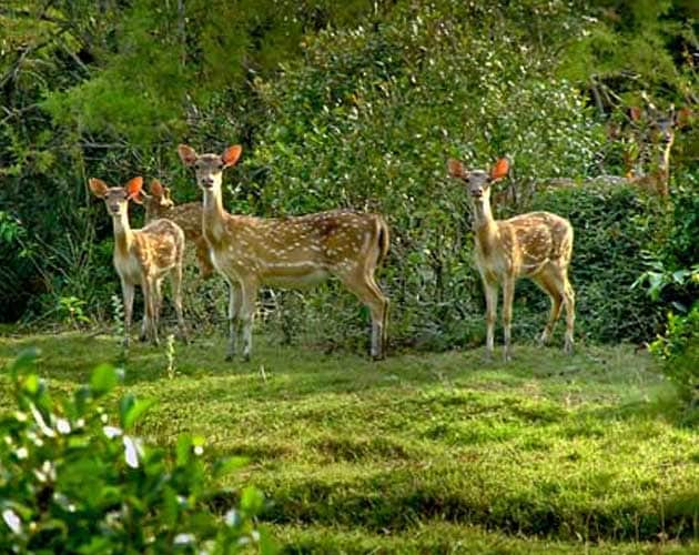 Bhitarkanika Deer Sanctuary